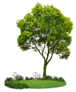 cropped-png_tree_by_paradise234-d5c5lob-Copie-1.png
